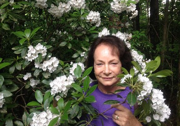 Mountain laurel is beautiful native surrounding the cabin, maximum bloom in May.